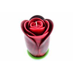 Royal Rose big